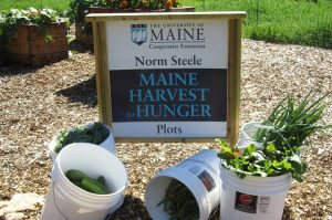 Norm Steele Maine Harvest for Hunger Plot sign and buckets of freshly harvested produce at the UMaine Gardens at Tidewater Farm