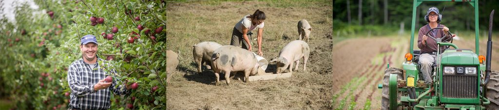 apple producer in orchard; pork producer feeding hogs; farmer driving a tractor