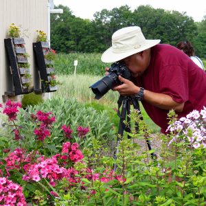 Photographer taking photos of flowers at the UMaine Garden at Tidewater Farm