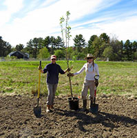 two master gardener volunteers planting a tree