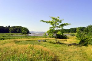 View of the marsh and bay from the UMaine Gardens at Tidewater Farm