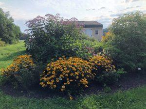 flowers at tidewater farm