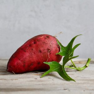 One sweet potato with a green vine, with a grey background