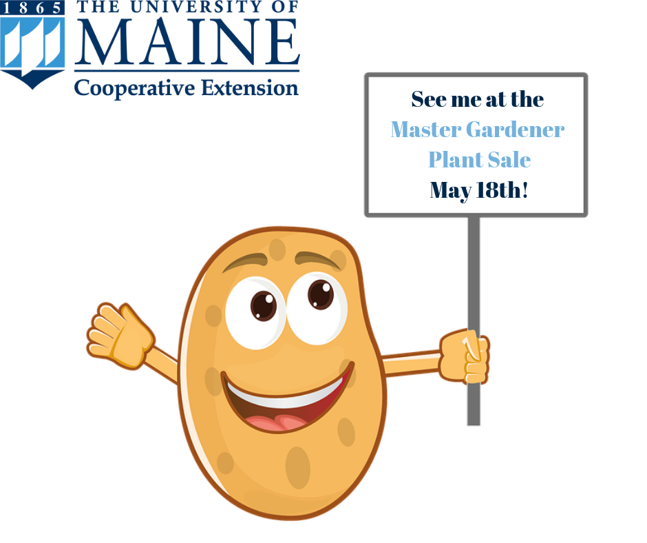 """A cartoon sweet potato holding a sign that reads """"See me at the Master Gardener Plant Sale May 18th!"""" with UMaine logo"""