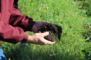 two hands holding soil over cover crop