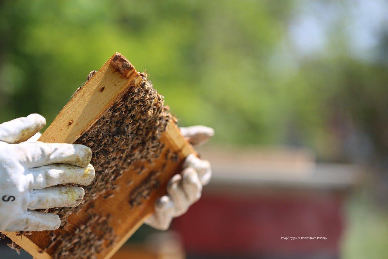 hands holding honey frame