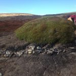 A pile of bones eroding out of a balsam bog