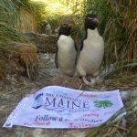 Rockhopper penguins standing beside a signed class flag