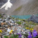 Flowers and snow along trail to Machu Picchu.