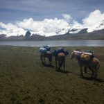 Three pack horses carrying gear.