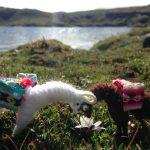 Llama dolls in Peru