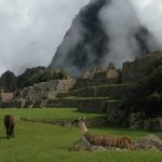 Llamas grazing near Huyana Picchu which towers over the ruins