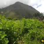 Vegetation and hills in Peru.