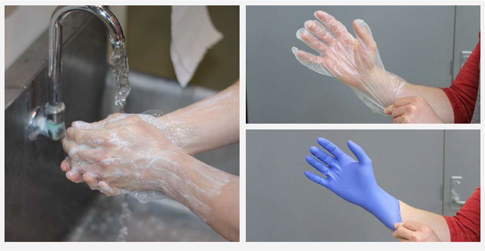cheesemaker washes hands and then puts on gloves