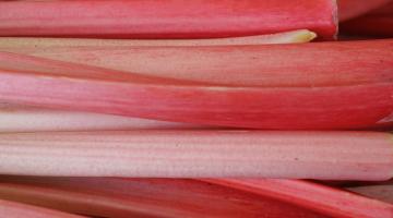 close up of red stalks of rhubarb running horizontally across image
