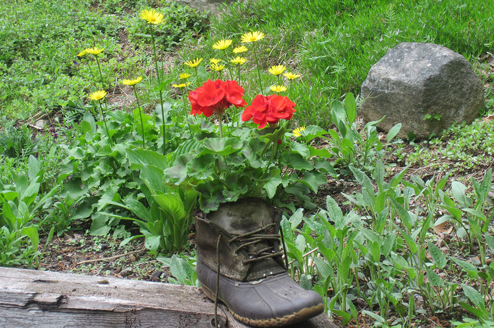 flowers planted in an old boot