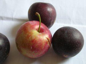 Asian plums