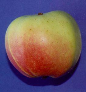 A dessert apple