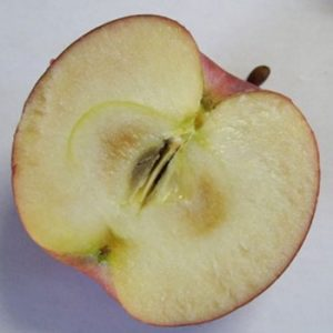 Firm flesh browning in an apple.
