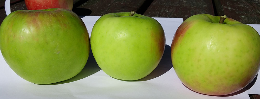 3 Honeycrisp apples