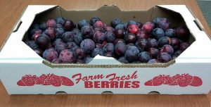 Plums in a cardboard box