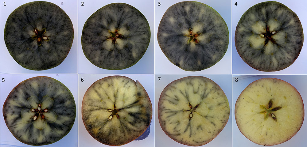 8 starch staining patterns in Honeycrisp apples.