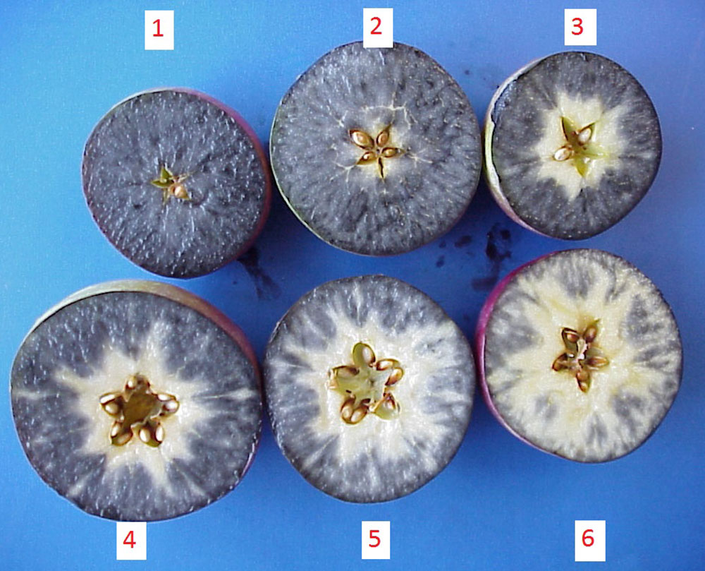 6 different starch staining patterns in McIntosh apples.