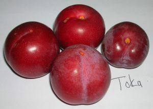 Toka plums