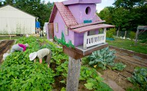 bird house in vegetable garden; photo by Edwin Remsberg