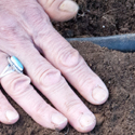 hand on garden soil; photo by Edwin Remsberg