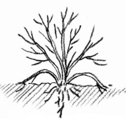 Plant Propagation - Cooperative Extension: Garden & Yard