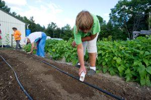 Master Gardener Volunteers working in the garden; photo by Edwin Remsberg