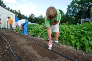 gardeners planting seeds; photo by Edwin Remsberg, USDA