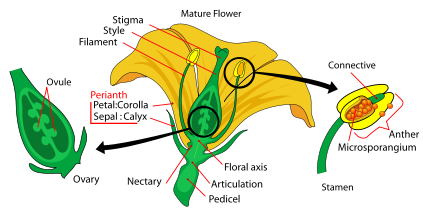 reproductive parts of a flower