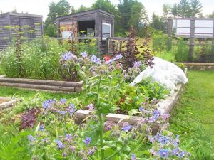 raised bed community garden