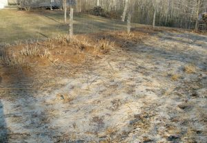 Dead oat cover crop and pine needle much in the spring