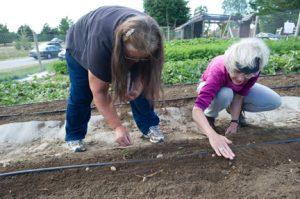Harvest for Hunger volunteers plant a donation garden
