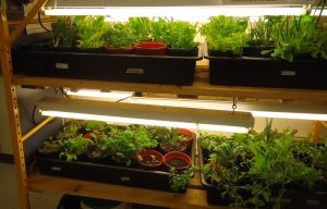 seedlings on indoor growing racks