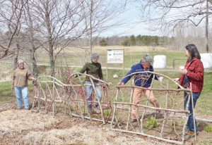 Fence building at Brae Maple Farm.