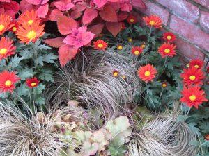 autumn blooms
