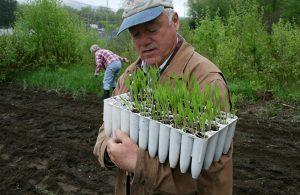 Master Gardener with seedlings ready for transplant