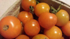 ripe, picked cherry tomatoes
