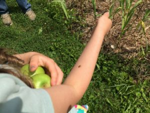 Ladybug lands on child's arm in the garden