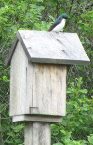 bird on bird house