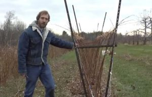 David Handley stands beside a row of properly pruned raspberries
