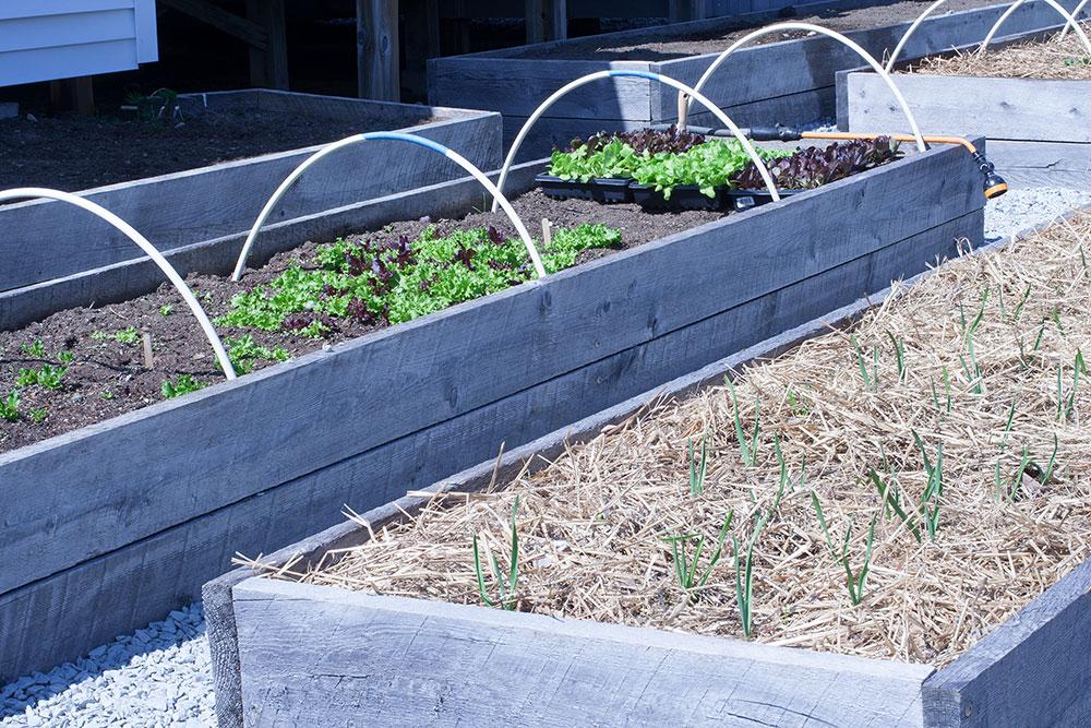 raised bed garden plots