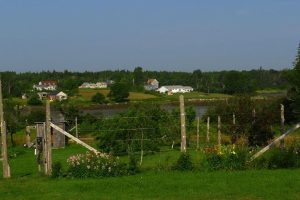 Garden and orchard at Blueberry Cove