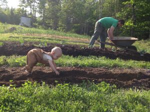 Dad and baby working in the garden