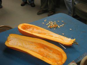 MVHS Heirloom Long Pie Pumpkin and seeds