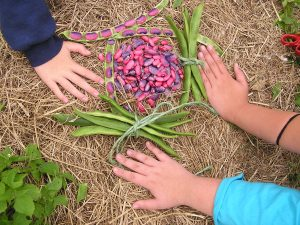 THMS students collect bean seeds